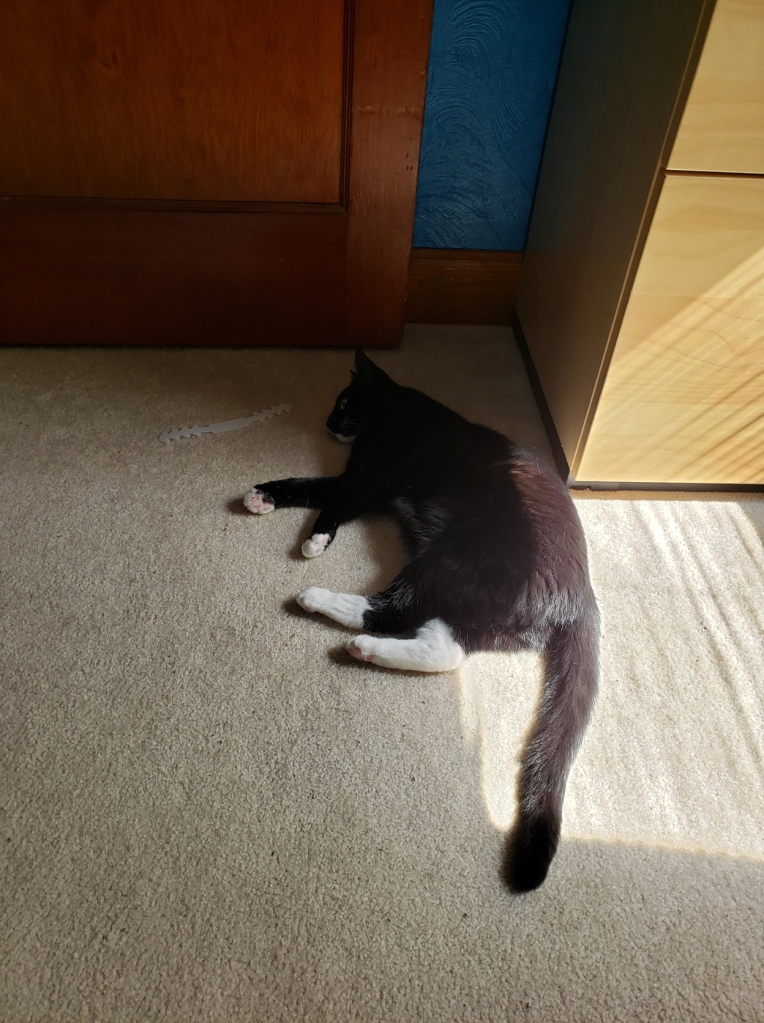 Tonks with her butt in the sun